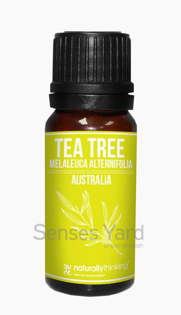 Tea Tree Essential Oil / 茶樹精油的功效:消炎抗菌/舒緩肌肉酸痛/消除異味/暢通呼吸道。Quality Essential Oil from Naturallythinking.