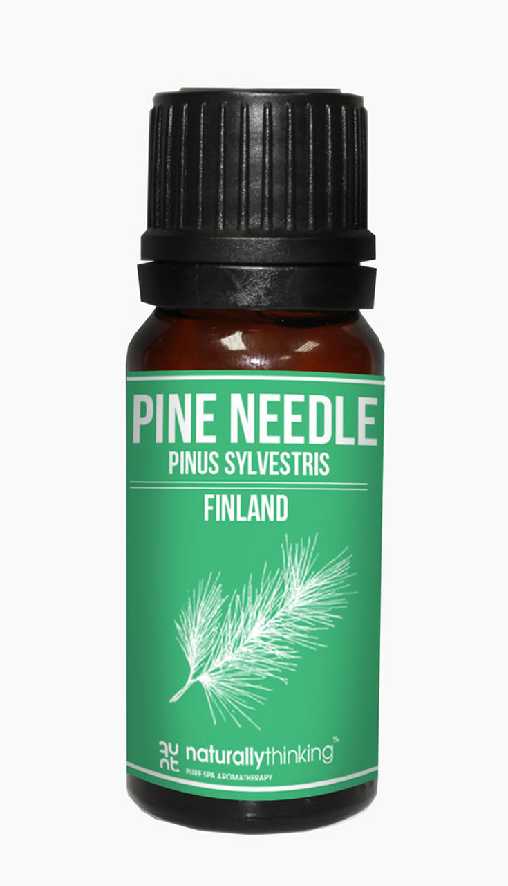 Pine Needle Essential Oil / 松針精油的功效:抗菌/舒緩鼻塞/除臭/恢復體力。Quality Essential Oil from Naturallythinking.